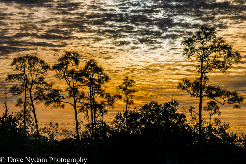 Yellow Sunset in Everglades