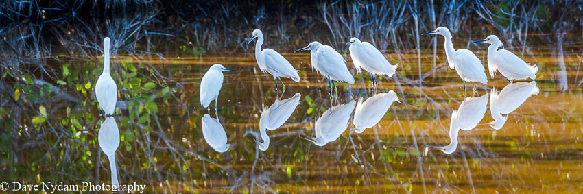 Everglades Reflections
