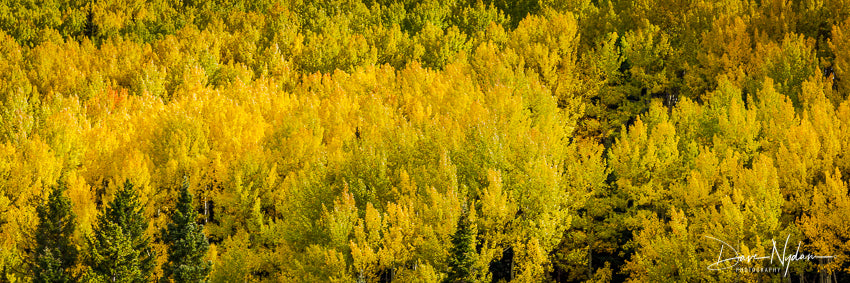 Fall Colors of Owl Creek Pass Colorado