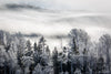 Frosted Forrest with Fog Photograph as Limited Edition Fine Art Print