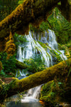 Waterfall thru Lush Green Trees  Photograph as Limited Edition Fine Art Print