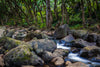 Waimea Valley Stream Photograph as Limited Edition Fine Art Print