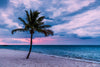 Palm Tree on the Beach at Sunrise Photograph as Fine Art Print