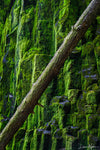 Diagonal Tree with Lush Green Rocks Photograph as Limited Edition Fine Art Print