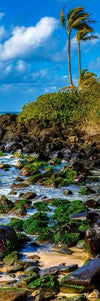 Rocky Beach with Palms Photograph as Limited Edition Fine Art Print