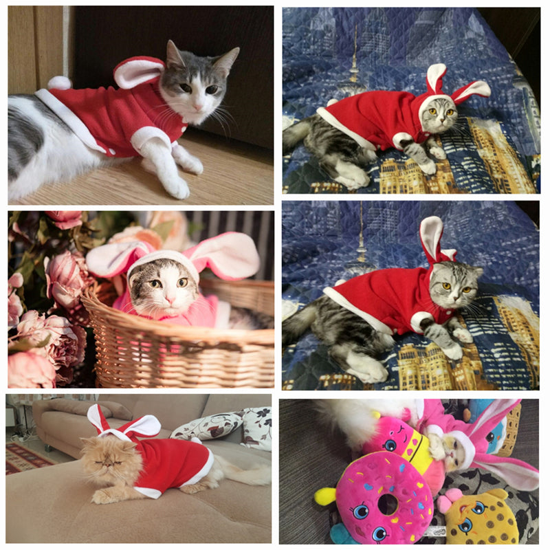Bunny Costume for Kitties - Fur Pants