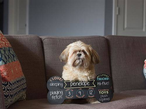 Pet Bone Photo Sharing Chalkboard