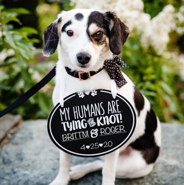 Pet Wedding Announcement Chalkboard