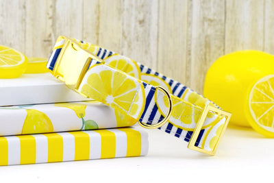 Lemon Dog Collar - Navy & White Stripes