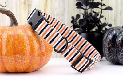 Dog Collar - Orange, Black & White Stripe