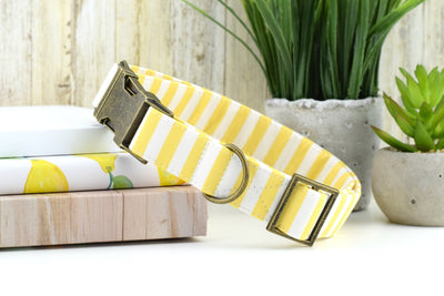 Striped Dog Collar, Yellow & White Striped Fabric Dog Collar, Girl Dog Collar, Custom Dog Collar, Antique Bronze Hardware, Sandy Paws Collar