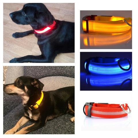Night Safety LED Glow Dog Collar