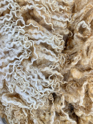 White Wensleydale Ewe Raw Fleece 1853