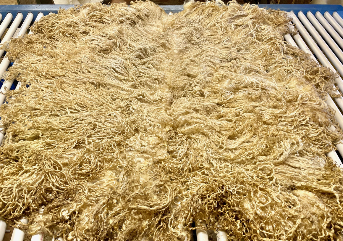 White Longwool Cross Lamb Raw Fleece 2037