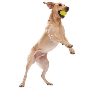 Jive Dog Ball by West Paw