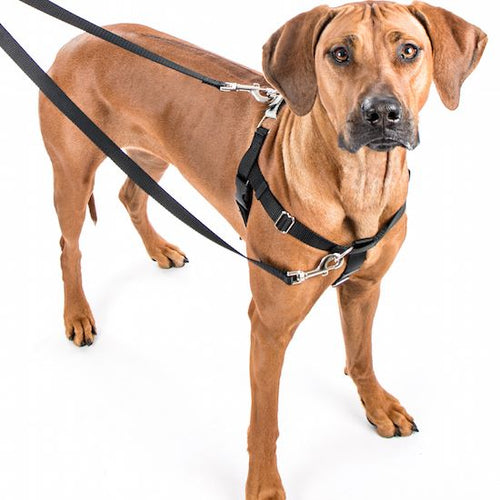 Freedom No-Pull Harness by 2 Hounds (XS-MEDIUM)