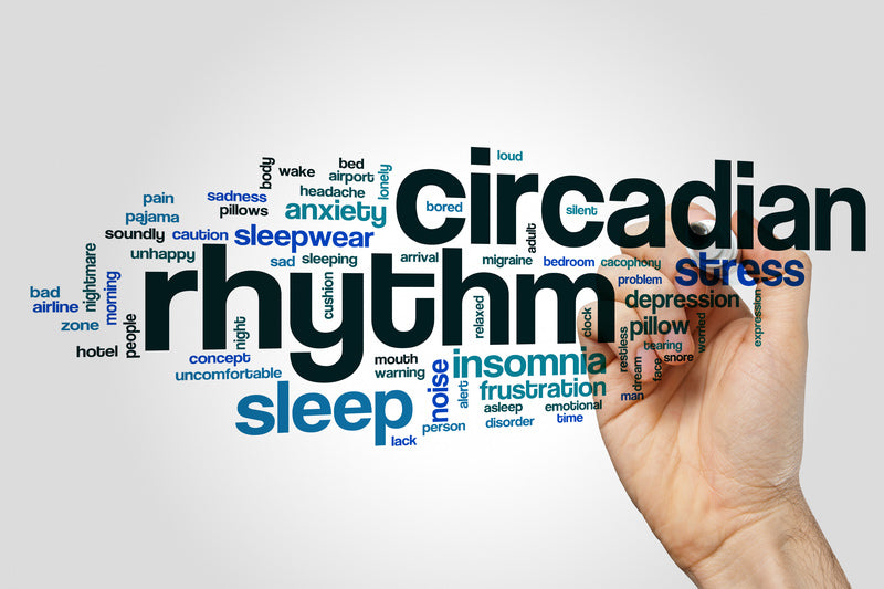 Circadian Rhythm And Melatonin