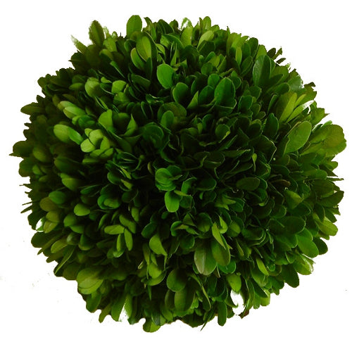 preserved boxwood ball four inches home decor garden