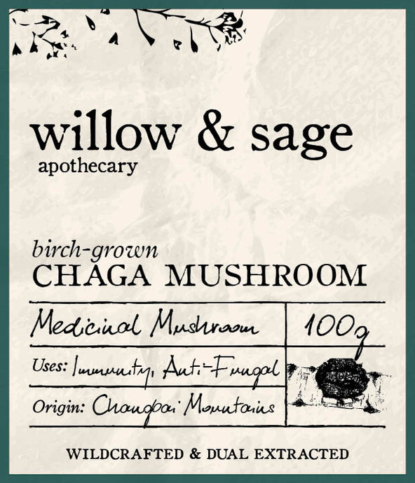Chaga Mushroom Extract - Willow and Sage Apothecary