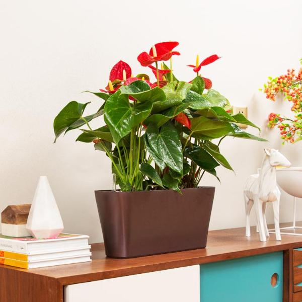 Simply Farm Cloud Series Planters, SF-CL4018