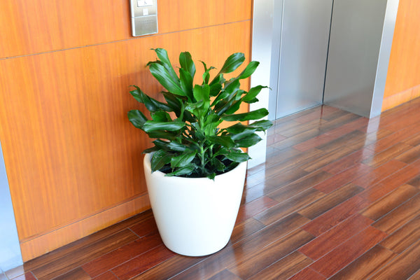 Simply Farm Aquas Series Planters, SF-AQ4340