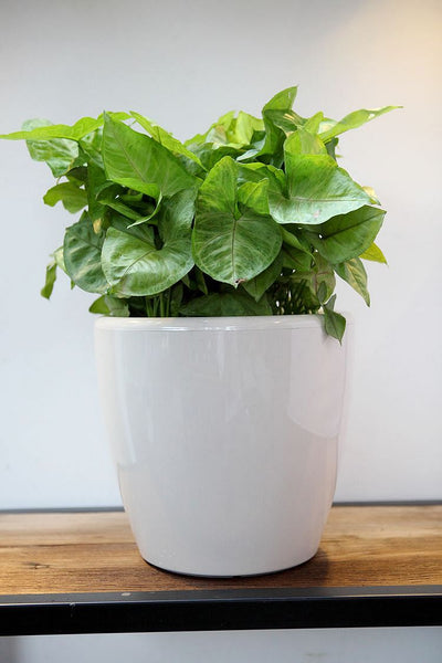 Simply Farm Aquas Series Planters, SF-AQ2826