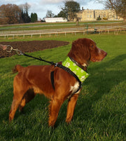 Reflective Dog Scarf/Bandana! Green Dog Scarf RUFFNEK® Green