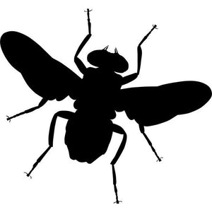 Housefly Stencil by Crafty Stencils