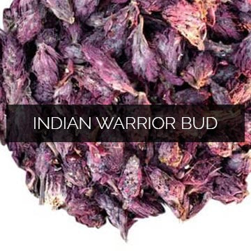 Indian Warrior Bud