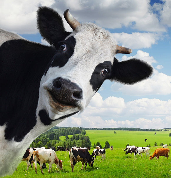 Research Environmental Impact of Dairy Farming