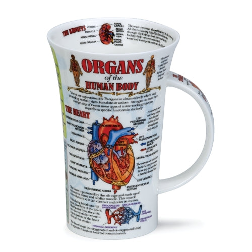 Dunoon Glencoe Fine Bone China Mug, Organs Of The Human Body