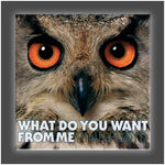 """Owl"" Stretched Canvas Print (Various Sizes)"