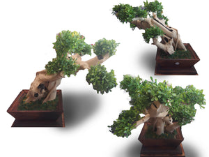 Home decoration bonsai three - 70 cm