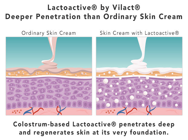 How Lactoactive® Works