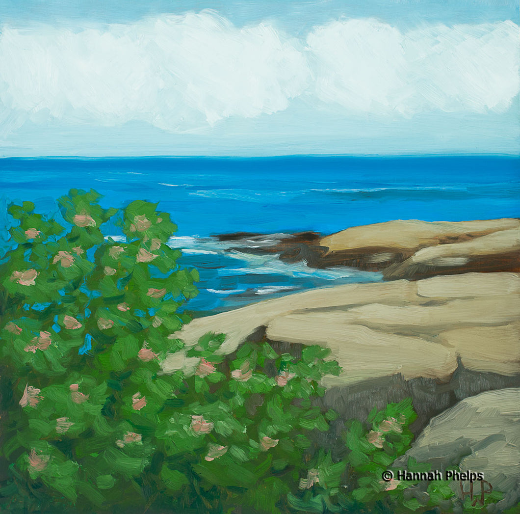 Oil painting of beach roses by the ocean in Rye, NH by New England artist Hannah Phelps