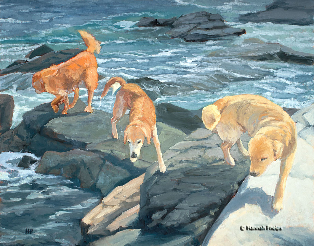Oil painting of a Golden Retriever dogs playing by the sea by New England artist Hannah Phelps