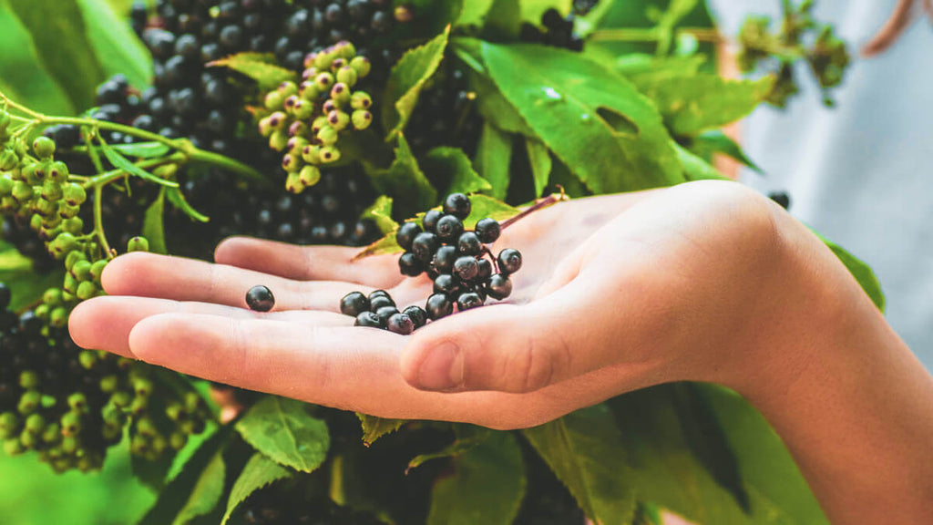 Is it safe to take elderberry every day?