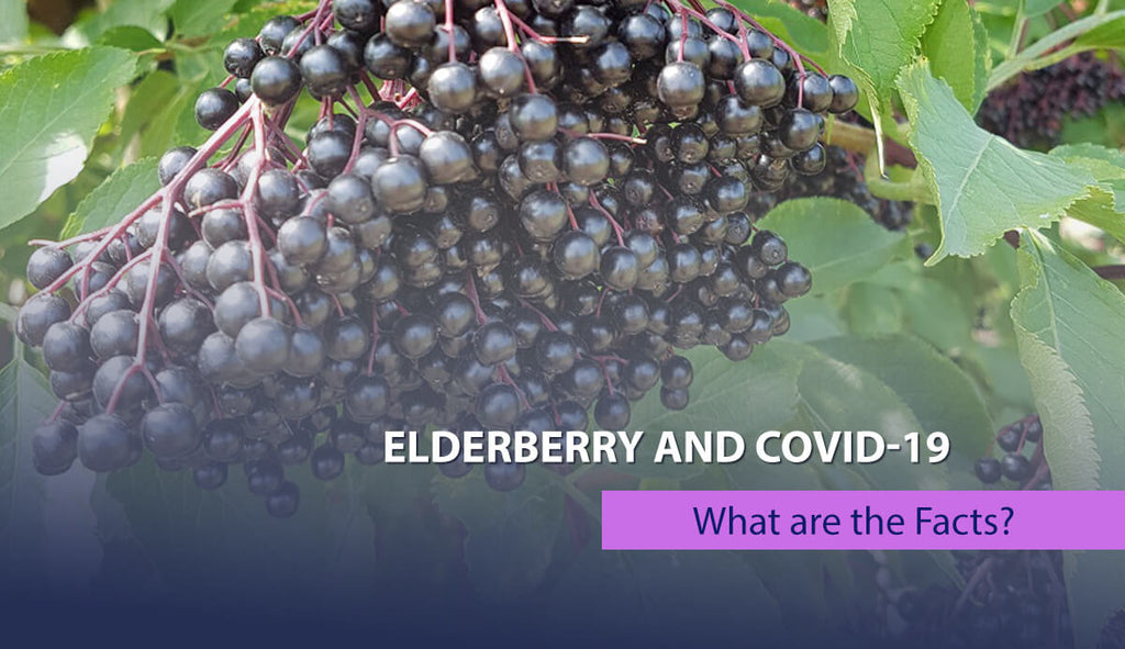 Elderberry and COVID-19 – What are the Facts?