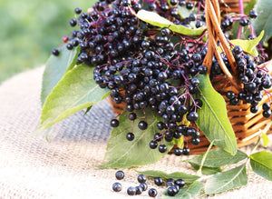 What is Elderberry?