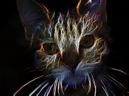 Cat Abstract