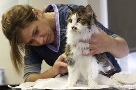 long haired cat grooming