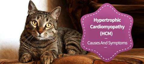 Hypertrophic Cardiomyopathy (HCM)- Causes And Symptoms