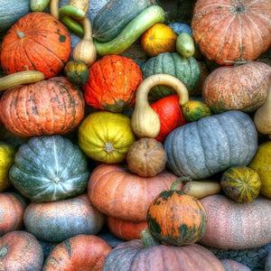 Collection of Squash
