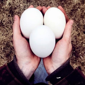Goose Eggs - Peak District Deli