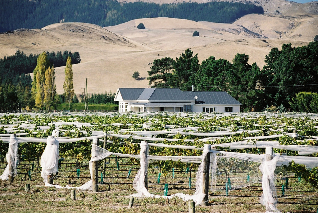 Dunnolly Estate Vineyard and Villa, North Canterbury
