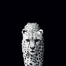 45002_C1 - titled 'Acinonyx Jubatus' by artist Nicolas Evariste - Wall Art Print on Textured Fine Art Canvas or Paper - Digital Giclee reproduction of art painting. Red Sky Art is India's Online Art Gallery for Home Decor - 55_WDC98070