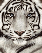 60202_C1_- titled 'White Tiger Face Portrait' by artist Rachel Stribbling - Wall Art Print on Textured Fine Art Canvas or Paper - Digital Giclee reproduction of art painting. Red Sky Art is India's Online Art Gallery for Home Decor - S2625