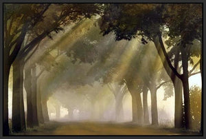 35171_FB1_- titled 'Misty Grove' by artist Steven Mitchell - Wall Art Print on Textured Fine Art Canvas or Paper - Digital Giclee reproduction of art painting. Red Sky Art is India's Online Art Gallery for Home Decor - 763_TR19316