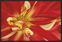 35172_FB1_- titled 'Red Dahlia' by artist Donald Paulson - Wall Art Print on Textured Fine Art Canvas or Paper - Digital Giclee reproduction of art painting. Red Sky Art is India's Online Art Gallery for Home Decor - 763_TR19427
