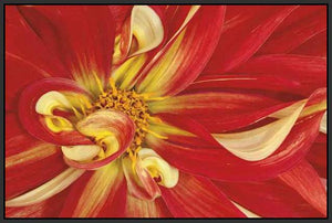 35172_FB2_- titled 'Red Dahlia' by artist Donald Paulson - Wall Art Print on Textured Fine Art Canvas or Paper - Digital Giclee reproduction of art painting. Red Sky Art is India's Online Art Gallery for Home Decor - 763_TR19427